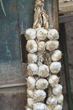 Braids of garlic Royalty Free Stock Photos