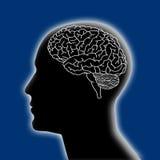 Brain. Human head focused on brain Stock Image