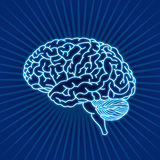 Brain. Illustration brain on rays background Royalty Free Stock Photos