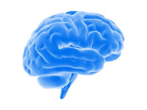 Brain. Human blue brain, isolated on white Stock Images