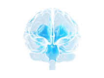 Brain. Human blue brain, isolated on white vector illustration