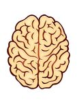 Brain. Vectoial draw of a brain over a white background vector illustration