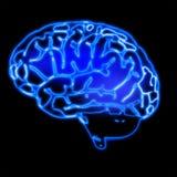 Brain Stock Images