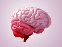 Brain. Pink brain; quality 3d render vector illustration