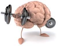 Brain. Fun brain, 3d generated picture Stock Image