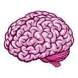Brain. Vector Illustration. EPS v 8.0 Stock Images