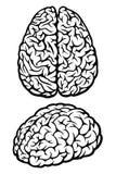 Brain. Silhouette of a human brain. Vector Illustration royalty free illustration