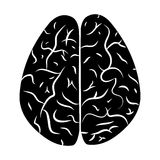 Brain 2. Royalty Free Stock Photography