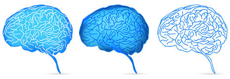 Brain. Set of brain isolated on white Stock Photography