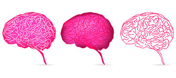 Brain Stock Images