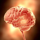 Brain. Conceptual image of a brain. 3d render illustration Royalty Free Stock Image