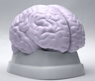 Brain Stock Photography
