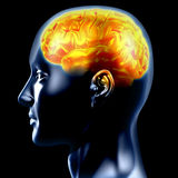 The brain. Is highlighted with hot color. The concept of intelligence Royalty Free Stock Images