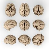 Brain. 3D illustration of human brain in different angles Royalty Free Stock Images