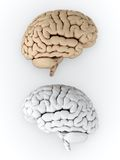 Brain. 3D illustration of white and brown human brain on white background Stock Photo