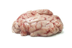 Brain Stock Image