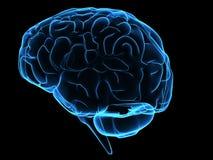 Brain. 3d rendered illustration of a human brain Stock Photo