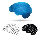 Brain. Human brain in several varieties vector illustration