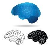 Brain. Human brain in several varieties Stock Photo