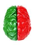 Brain - 3d Stock Images