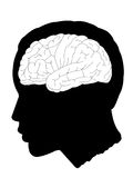 Brain. The brain highlighted from head Shadow black background Stock Images