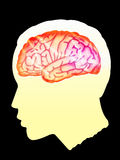 Brain. The brain highlighted brown colour and head Shadow with light yellow gradient in black background Stock Image