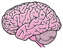 Brain. Mind Power in Vector format Royalty Free Stock Image