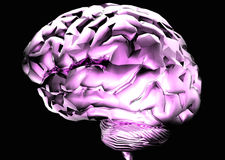 Brain. Purple 3D Brain Royalty Free Stock Photography
