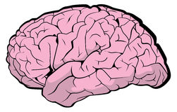 Brain. Very simple brain vector illustration Royalty Free Stock Photos