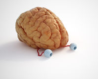 Brain. There's nothing to see .. it's just a brain Stock Images