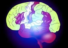 Brain. Human brain on black background Stock Photos