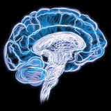 Brain. An abstract illustration of the brain Royalty Free Stock Images