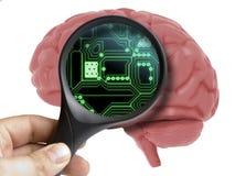 Brain Analyzed humano com ampliação dentro da inteligência artificial de circuito eletrônico isolado ilustração stock