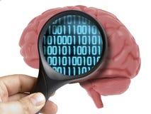 Brain Analyzed humano com ampliação do código binário digital que programa dentro do isolado fotografia de stock