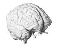 The brain anatomy. 3d rendered medically accurate illustration of the brain anatomy royalty free illustration
