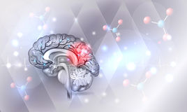 Brain anatomy problems. Human brain abstract light grey abstract background with glow Stock Images