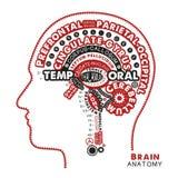Brain Anatomy Typographic Artwork Ilustração inspirada do vetor ilustração do vetor