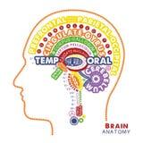 Brain Anatomy Typographic Artwork Ilustração inspirada do vetor ilustração royalty free
