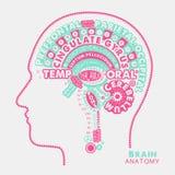 Brain Anatomy Typographic Artwork Ilustração inspirada do vetor ilustração stock