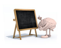 Brain with arms, legs and chalk on hand in front of blackboard Stock Photography