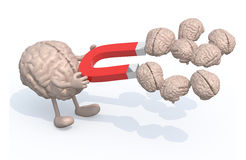 Brain with arms, legs and magnet on hands, catch many other brai Royalty Free Stock Images