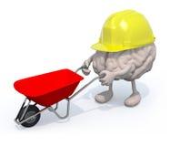 Brain with arms, legs and workhelmet carries a wheelbarrow Stock Photo