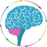 Brain arrow logo. Illustration art of a brain arrow logo with isolated background Stock Photography