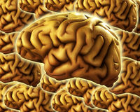 Brain Background. A background made out of human brains, would be good for medical or thought concepts Royalty Free Stock Image
