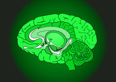Brain on Black Stock Photography