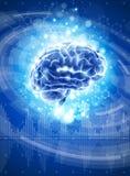 Brain - blue technology illustration Royalty Free Stock Image
