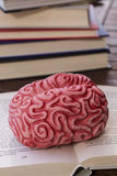Brain on a book Royalty Free Stock Image