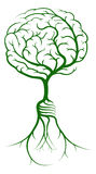 Brain branches light bulb roots Royalty Free Stock Photography