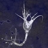 Brain cell Stock Images