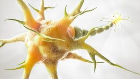 Brain Cell no fundo branco - rendição 3D Ilustração do Vetor
